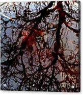 My Reflection Bucket Acrylic Print by Steven Valkenberg