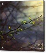 Natural Lightness Of Being Acrylic Print