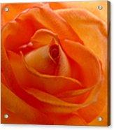 Orange Swirls Rose Flower Acrylic Print