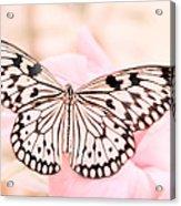 Paper Kite Acrylic Print