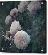 Perennial Gardens - Fall #04 Acrylic Print