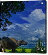 Philippine Countryside Acrylic Print