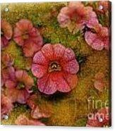 Pink Calibrachoa Photoart II   Acrylic Print