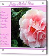 Pink Camellia - Happy Mother's Day Acrylic Print