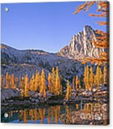 Prusik Peak Behind Larch Trees Acrylic Print
