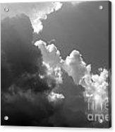 Seagulls In Flight Mb058bw Acrylic Print
