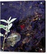 Semi Abstract Nature 2 Acrylic Print
