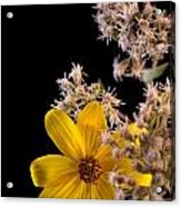 Shy Yellow Flower Acrylic Print