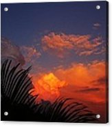 Sky Palm  Acrylic Print
