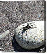 Spider In The Sun Acrylic Print