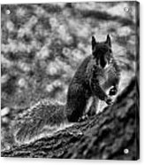 Squirrel In The Park V3 Acrylic Print