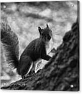 Squirrel In The Park V4 Acrylic Print