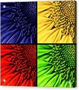 Sunflower Medley Acrylic Print