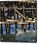 Surfer Dude 5 Acrylic Print