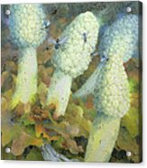The Green Man With Fly Agaric Acrylic Print