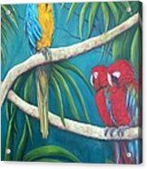 Three Is A Crowd,macaws Acrylic Print