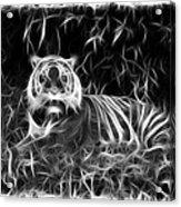 Tiger Spirit Acrylic Print
