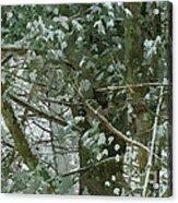 Tree Branch Acrylic Print