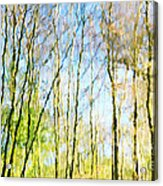 Tree Reflections Abstract Acrylic Print