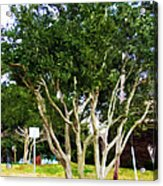 Trees In A Suburban Neighborhood In Summer Acrylic Print
