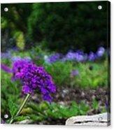 Violet Flower Acrylic Print