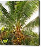 Westmoreland Jamaica 4 Acrylic Print