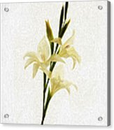 White Gladiolus Mixed Media Painting Acrylic Print