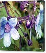 Wild Blue Rose Acrylic Print