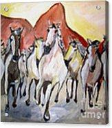 Wild Mustangs Acrylic Print by Sidney Holmes