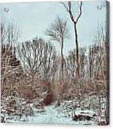 Woodland Walk Acrylic Print