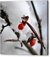 001 Frozen Berries Acrylic Print