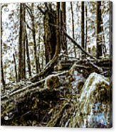 _0010060 Acrylic Print