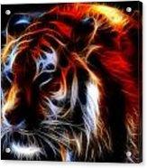 0012 Siberian Tiger Acrylic Print