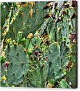 002 For The Cactus Lover In You Buffalo Botanical Gardens Series Acrylic Print