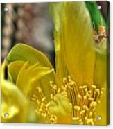 003 For The Cactus Lover In You Buffalo Botanical Gardens Series Acrylic Print