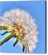 003 Make A Wish Acrylic Print