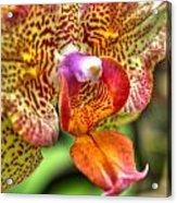 004 Orchid Summer Show Buffalo Botanical Gardens Series Acrylic Print