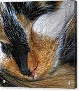 0053 Sleeping Cleo Acrylic Print