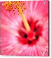 00a Buffalo Botanical Gardens Series Acrylic Print