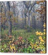 0133 Misty Meadow 2 Acrylic Print
