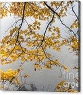 0135 Autumn Gold  Acrylic Print