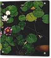 0148-lily -   Pastel Chalk 2 Sl Acrylic Print