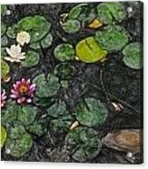 0148-lily -  Synchro Sl Acrylic Print