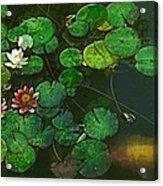 0148-lily -  Academic Sl Acrylic Print