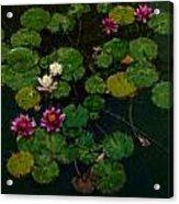 0151-lily -   Expressionist Plein Air Sl Acrylic Print