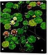 0151-lily -  Pastel Chalk 1 Sl Acrylic Print