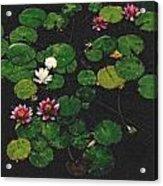 0151-lily -  Pastel Chalk 2 Sl Acrylic Print