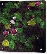 0151-lily -  Watercolor 2 Sl Acrylic Print