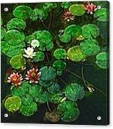 0151-lily - Academic Acrylic Print