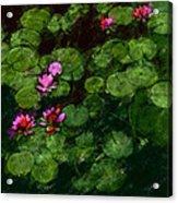 0151-lily - Chalk 1 Sl Acrylic Print